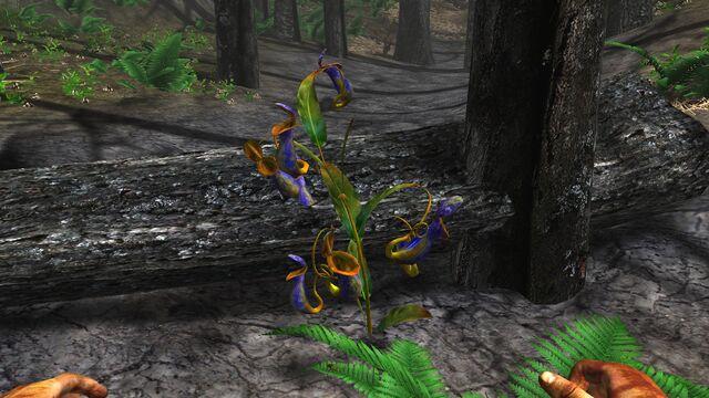 File:Carnivorous pitcher plant.jpg