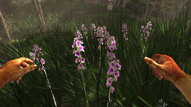 File:Purple-white prairie flower.jpg