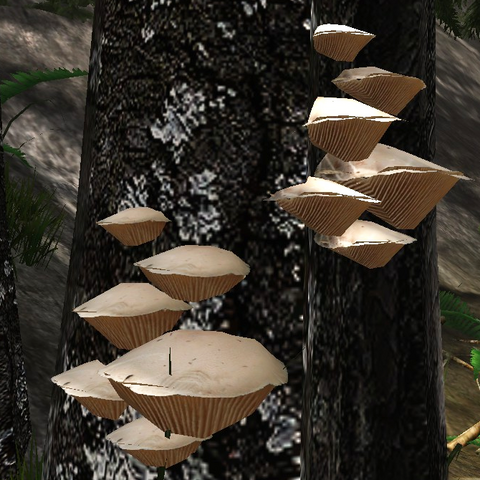 File:Wood gill fungus.png