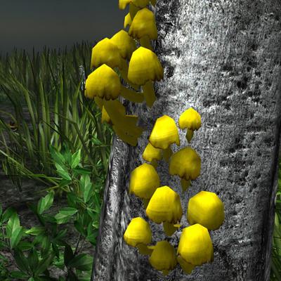 Yellow mushrooms in the wild