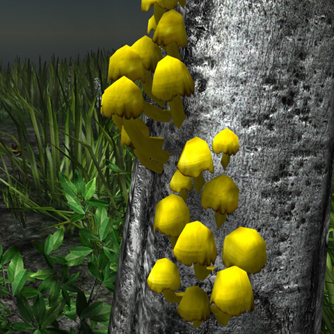 File:Yellow mushrooms in the wild.png