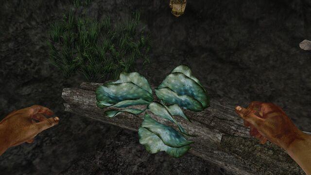 File:Pearl-blue shelf fungus.jpg