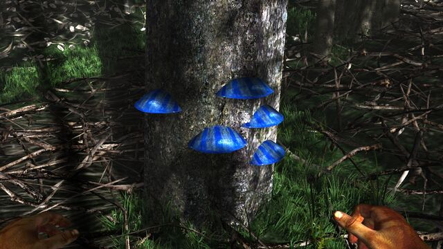 File:Ble scaley tree fungus.jpg