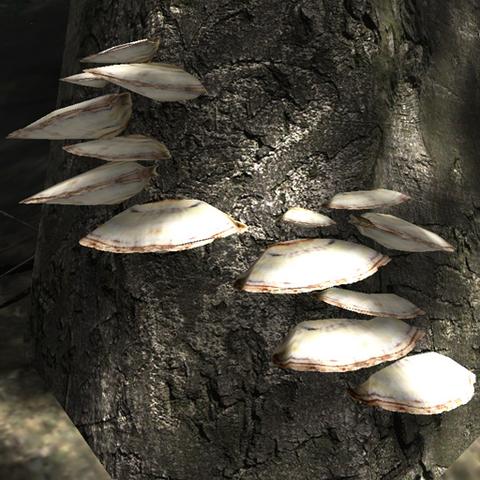 File:Brown shelf fungus.png