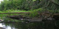 Sucker Creek