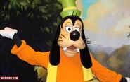 Goofy-disney-world-1-10-2