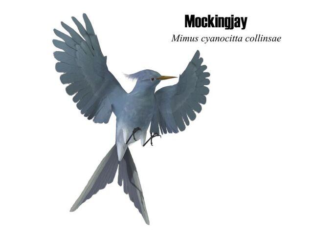 File:Mockingjay.jpg