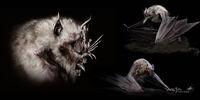 Morgul Bats