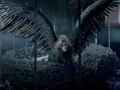 Mylie Cyrus Cant Be Tamed video bird 350w 263h