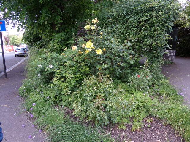 File:Rose Garden.jpg