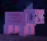 Pigs mcsm