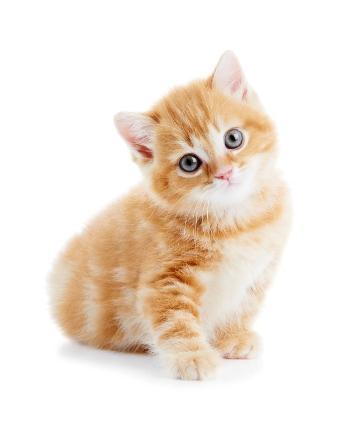 File:159706-357x421-kitten.jpg