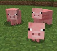 Pig familt