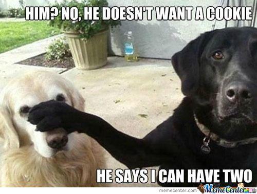File:Derpy-dogs o 815479-1-.jpg