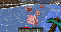 Pigs on Ice