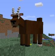 Goats - Copy (3)