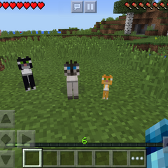 Tamed Ocelots, all three kinds.
