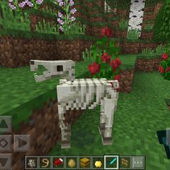 A Skeleton Horse