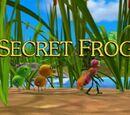Secret Frog