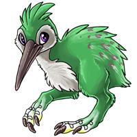 Swamp nokwi