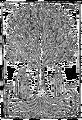Arbor scientiae, Ramon Llull 2004-08-25.png