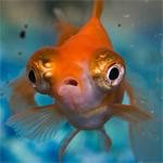File:Fishy.jpg