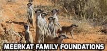 Meerkat Family Foundations