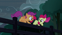 Apple Bloom and Scootaloo standing on a fence S5E6