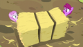 Berryshine and Pina nearly crushed by hay bale S5E17.png