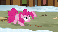 Pinkie stops stomping and looks at Rutherford S7E11