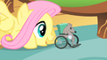 Fluttershy 'There you go Mr Mousy' S1E22.png