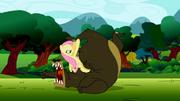 Fluttershy wrestling a bear S2E03