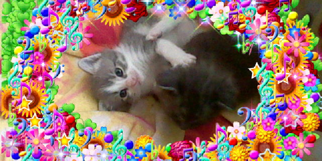 File:Bronyboybro cats 10.jpg