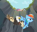 Ein Lieblingstier für Rainbow Dash