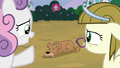 "Sweetie Belle ""won't turn him back into a puppy"" S7E6.png"