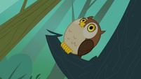 Owl hooting S3E06