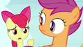 "Apple Bloom ""no, that's crazy!"" S7E8.png"