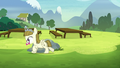 Zipporwhill follows Sweetie Belle S7E6.png