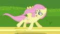 Fluttershy happy about her flying S2E22.png
