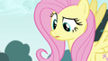 Fluttershy about to have an epiphany S4E16.png