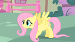Fluttershy lands on the ground S1E17