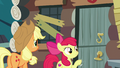 Apple Bloom knocking on Goldie Delicious' door S7E13.png