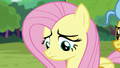 Fluttershy dejected over her destroyed dream S7E5.png