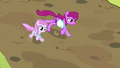 Berryshine and Pina Colada racing S5E17.png
