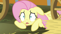 "Fluttershy ""How could I forget?"" S5E21"