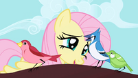 Fluttershy talking to bird S01E01