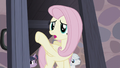 """Fluttershy """"they were right over there!"""" S5E2.png"""