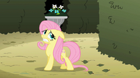 Fluttershy scanning surroundings S2E01