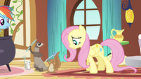 Fluttershy take a break S3E13