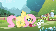 Fluttershy opening theme